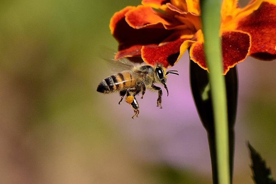 Les bienfaits du miel sur votre corps